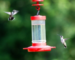 HUMMINGBIRD FEEDER (2 in flight) - House - 12 Aug 2014