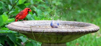 Cardinal waits his turn