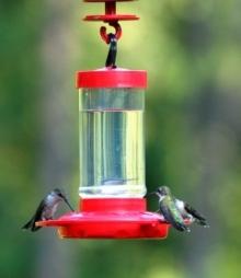 RUBY-THROATED HUMMINGBIRDS AT FEEDER - Blog - 1 Sept 2017